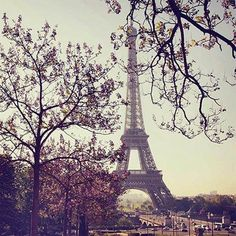 Paris in the Springtime :: Tour Eiffel: Trees in Paris with Eiffel Tower in the background