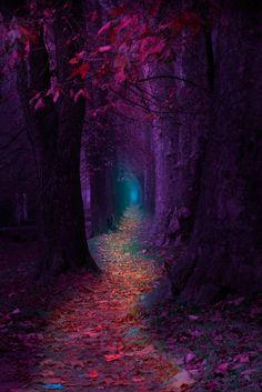 alldayphotography: Fairytale Pathway by Mevludin Sejmenovic...