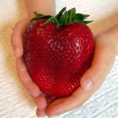 100Pcs Giant Red Strawberry Seeds Rarest Heirloom Super Giant Japan Strawberry Seeds Garden at Banggood