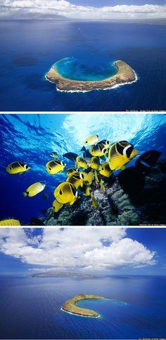 Explore Molokini, the sunken volcanic crater off the coast of Maui