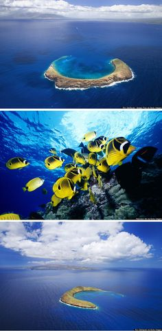 Explore Molokini, the sunken volcanic crater off the coast of Maui