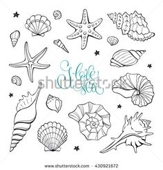 Ähnliche Bilder, Stockfotos und Vektorgrafiken von Hand drawn sea shells and stars collection. Marine illustration for coloring books. Shellfish outlines isolated on white background. Shell Drawing, Ocean Drawing, Doodle Art, Doodle Drawings, Meer Illustration, Coloring Books, Coloring Pages, Doodles, Creature Drawings