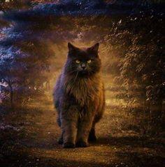 Quem não se relaciona bem com o próprio inconsciente não transa o gato. Ele aparece, então, como ameaça, porque representa essa relação precária do homem com o (próprio) mistério. O gato não se relaciona com a aparência do homem. Ele vê além, por dentro e pelo avesso. Relaciona-se com a essência.