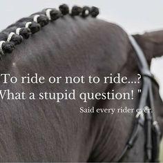 Indeed! #showgirlequestrian #fortheloveofhorses #ponylove #horserider
