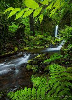 Rivendell - An incredible fairy-tale like waterfall seen through a window of fresh spring greenery in Oregon's lush Columbia River Gorge.