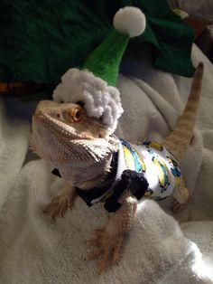JUVENILE BEARDED DRAGON PRE MADE SLEEVELESS SHIRT WITH MATCHING BENNIE HAT/HOOD    eBay