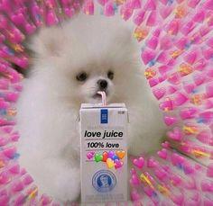 37 Mejores Imagenes De Plantillas De Amor Meme Caras De Memes