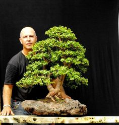 Image result for portulacaria afra bonsai