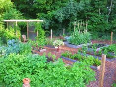 Kevin Jacobs: For my kitchen garden, I built eight 4-by-8 foot beds from inexpensive, rough-hewn hemlock. Hemlock, like cedar and redwood (these last two are pricey) is naturally rot-resistant. The boards of these beds are 12-inches high and 2-inches thick. Running perpendicular to the hemlock-enclosed beds are four 2-by-8 foot beds framed with 1-by-10 inch pine. Paths here are paved with shredded wood chips, and the garden is protected from woodchucks, rabbits, and deer by wire-mesh…