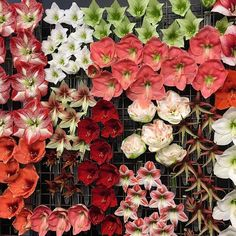 Loved this Amaryllis display at the @royalfloraholland tradeshow by Van der Ende one of the top growers who have a great selection and the latest varieties. Let us know with a few days notice what you need and will get it . #amaryllis#flowersfromallovertheworld #passionateaboutflowers #fbflowertour #flowersoninstagram