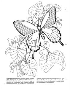 615 Best Z Coloring Flowers Butterflies Dragonflies Etc
