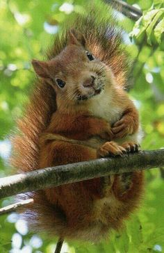 'Oh Hi There' Cute Squirrel!