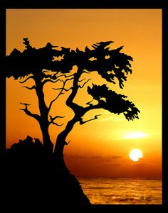 The Lone Cypress - Phil Lewis Art - Coloring Books for Adults Cypress Pine, Monterey Cypress, Secret Garden Colouring, Lone Tree, Halloween Trees, Watercolor Trees, Scroll Saw Patterns, California Beach, Pebble Beach