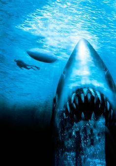 Jaws: The Revenge Phone Wallpaper Jaws Film, Jaws 2, Jaws Movie, Horror Films, Horror Art, Stephen King Books, Shark Art, Movie Wallpapers, Killer Whales