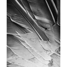 Feathers Photography Abstract Black And White Home Decor 10x8 Print... ($25) ❤ liked on Polyvore featuring home, home decor, wall art, abstract wall art, framed wall art, framed photography wall art, feather wall art and black and white framed wall art