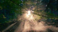 cinemagraph gif nature cinemagraph smoke sunset forest sunrise fog dawn mist living stills