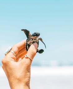 Releasing baby sea turtles in Sri Lanka 🤘🏼🐢 Cute Creatures, Beautiful Creatures, Animals Beautiful, Cute Baby Turtles, Animals And Pets, Funny Animals, World Turtle Day, Mode Poster, Save The Sea Turtles