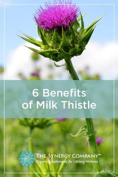 Milk thistle extract is undeniably one of the most well-loved and well-studied herbal supplements. Our patented SuperPure��Milk Thistle supports optimal liver health plus so much more.