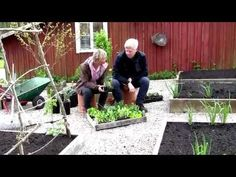 Annika ger råd till er som inte hunnit förgro plantor