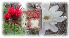 Garden or Home in white and red & Jardin ou Maison en blanc et rouge