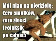 How To Plan, Animals, Animales, Animaux, Animal, Animais