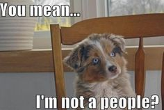 Totally my dog. Thinks he's a people every day!