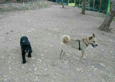 El Parque Canino 05/16 Brown y Thais
