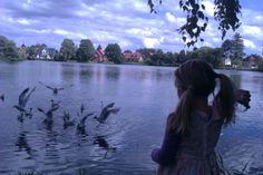 Emdrup Sø. Sæt dig på bænken og nyd udsigten og det rige fugleliv.