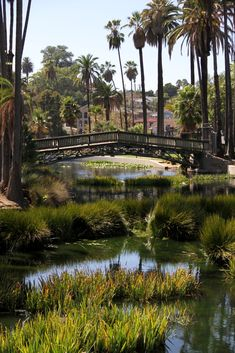 Echo Park Lake Bridge, Los Angeles, CA. I dreamt of this place once before I even know it existed..