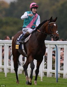 Good horse: Frankel is the world's most successful racecourse and retired unbeaten in 2012 - if your horse looks like this, place that bet