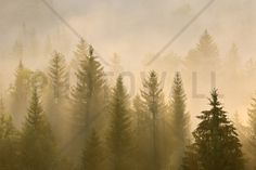 Morning Mist in Bavaria - Fotobehang & Behang - Photowall