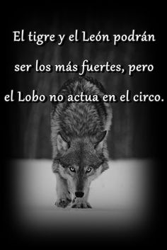 #Wolf #Quotes #Frases #Lobo