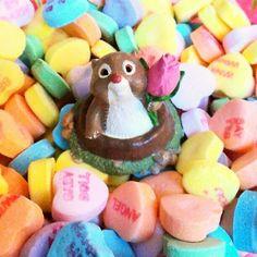 Valentine Groundhog