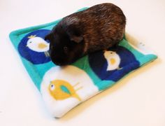Pee Pad for Guinea Pigs and Other Small Animals by SquigglyPigs