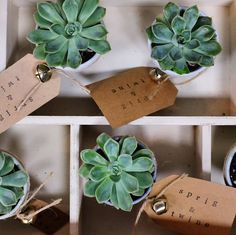 awesome vancouver florist  ❤. #succulent #florist #shoplocal by @sprigandtwine  #vancouverflorist #vancouverflorist #vancouverwedding #vancouverweddingdosanddonts