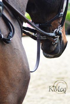 kara m equestrian photography || bay english