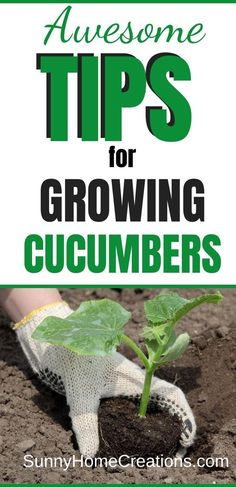 Awesome tips for growing cucumbers to make sure you have big, strong plants. Great ideas for getting rid of bitter cucumbers. Backyard Vegetable Gardens, Veg Garden, Edible Garden, Lawn And Garden, Growing Plants, Growing Vegetables, Gardening For Beginners, Gardening Tips, Gardening Direct