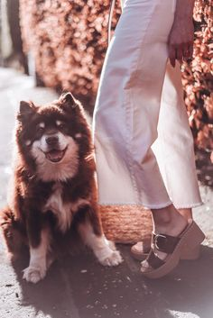 All white in cashmere and denim culottes with a leather knot belt, basket bag and Fitflop pilar clog sandals Denim Culottes, Clog Sandals, Basket Bag, Fitflop, Open Toe, Clogs, Knot, Cashmere, Essentials