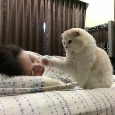 #wakeup #cat