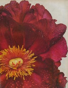 Irving Penn Peonies, US Vogue December 1968 (Detail)