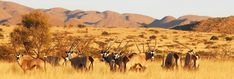 Allow us to be your travel agent for a blissful wildlife safari experience in South Africa. Choose from a range of all-inclusive safari packages priced economically. South Africa Safari, Adventure Activities, Game Reserve, Wildlife, African, Tours, Cape, Southern, Travel