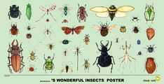 Wonderful Insects Poster - Decorate your room with this posters created by Joris Snaet for 🐜😍 Decorate Your Room, Insects, Museum, Photo And Video, Posters, Animals, Diy, Diy Room Decor, Animales