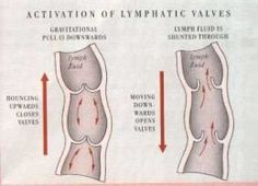 How to Unleash Lymphatic Toxins Through Rebounding