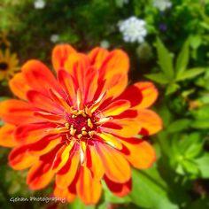Flower. Topsfield Ma