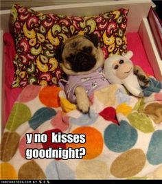 Lol!!!! I think all pugs love to sleep like little humans. Lol. So cute!