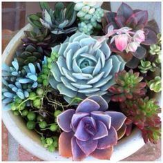 My kind of garden - potted succulents
