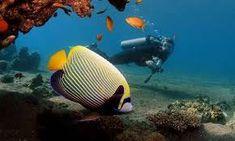 Viajes Mar Rojo en Egipto,Viajes Mar Rojo En Egipto World Tour Advice  ofrece Viajes Mar Rojo en Egipto y disfrutar de Tours de buceo y snorkeling en el Mar Rojo, el tour Safari en el Mar Rojo,  Quad Bike Safari en el Desierto.Descubrí un Mundo Nuevo EGIPTO y Mar Rojo