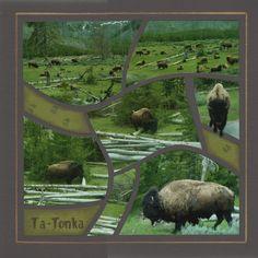 Bison at Yellowstone #scrapbook #layout