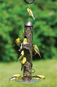 17.5 in. Copper Mixed Seed Spiral Feeder. Birds LOVE patented Songbird Essentials BirdQuest Spiral Feeders! More ports means more birds. Birds love to Run around The Spiral instead of flying to another perch. Spiral allows cardinals, grosbeaks and other desirable large songbirds to feed. With normal perch tube feeders, these birds have difficulty feeding without a seed tray. Lifetime warranty on workmanship and normal wear and tear.  #birdfeeder #seedfeeder