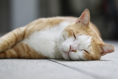 Werking | Kattenhotel | Hof Ter Linden Cats, Animals, Gatos, Animales, Animaux, Animal, Cat, Animais, Kitty